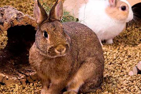 Kaninchen in bunnyBedding Cosy